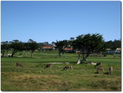 17 Mile Drive - Golfplätze und Wild