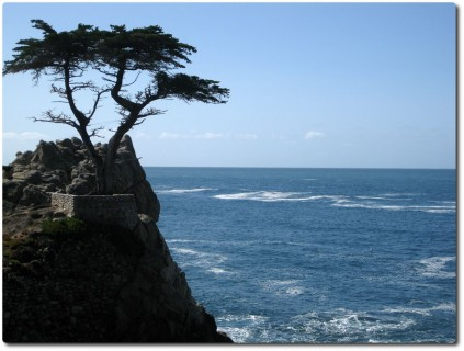 17 Mile Drive - Lonely Cypress