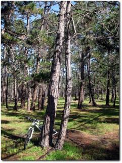 17 Mile Drive - Del Monte Forest
