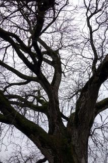 Baum 45 - Walnuss Gossliwil