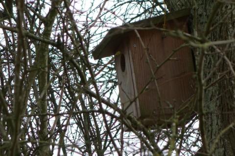 Baum 48 - Weissdorn - Vogelhaus