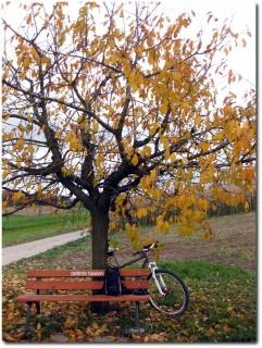 Geocache - GC2DE30 - Herbstbänkli