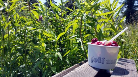 Frozen Joghurt im Klostergarten