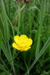 Blumen 2015