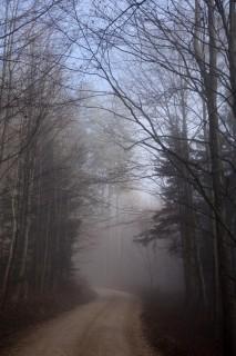 Nebelgrenze bei 750m