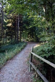 Albiskette - Trail
