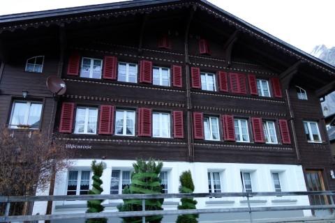 Skilagerromantik - Alpenrose