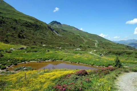 See und Bergblumen auf der Alp Nova
