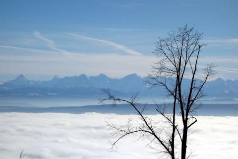 Alpenpanorama über dem Bielersee