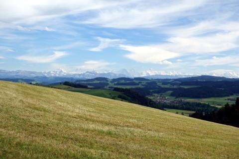 Alpen und Wiesen