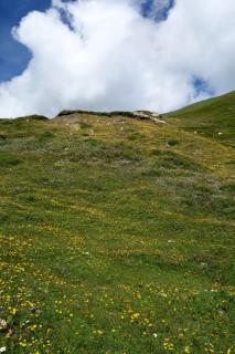 Blumenmeer auf der Alpwiese