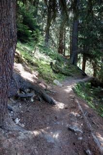 Abfahrt durch den Altenmattwald nach Monstein