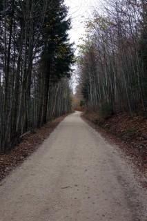 Uphill zum Althüsli - Endlos...