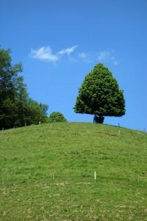 Einsamer Baum oberhalb des Lochgrabe