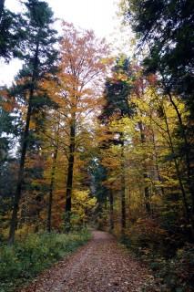 Herbstwald unter dem Nebel