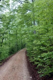 Aufstieg im Grün zur Walematt