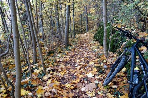 Herbstwald bei der Ruine Balm
