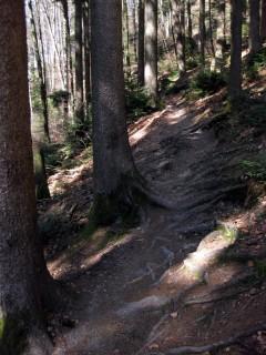 Bantiger Trail-Wurzeln