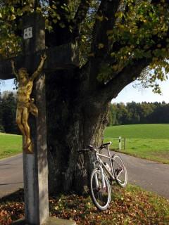 Baum 99 - Kreuz mit Linde