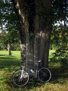 Baum und Bike