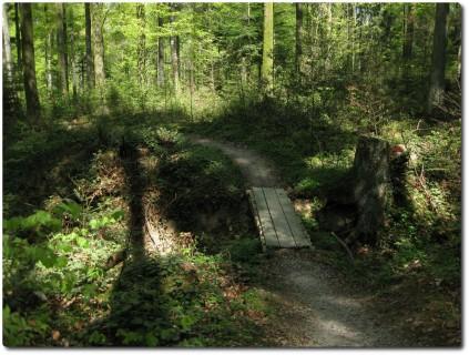 Trail durch den Buechibärg