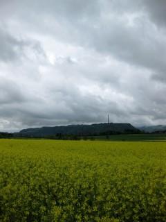 Belpberg hinter Rapsfeld