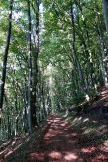 Schöner Wald bei der Bernhalde