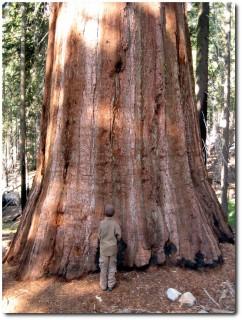...und noch ein grösserer Baum !