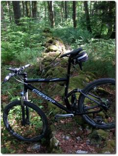 Steinerne Kantonsgrenze im steilen Wald