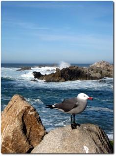 Ein Küstenvogel !