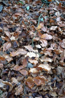 Herbstblätter 2014