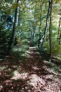 Trails auf dem Blauen