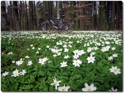 Die Emme-Mountainbike-Tour 3. Tag ! | Spoony's Bike Blog