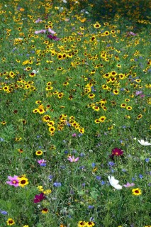 Wunderbare Blumenwiese