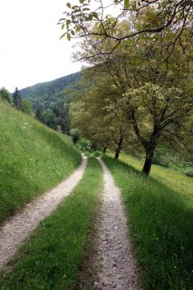 Feldweg runter ins Bogental