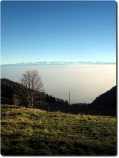 Aussicht vom Ober-Brüggliberg aufs Nebelmeer