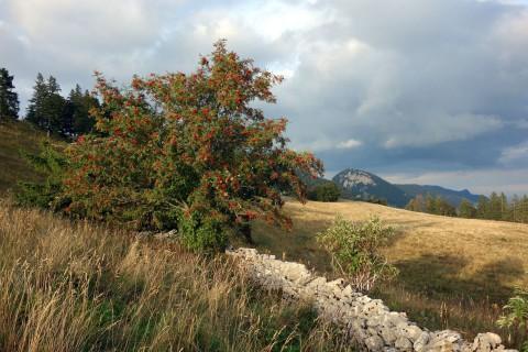 Bettlachstock - Steinmauer