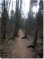 Trail rund um den Burgäschisee