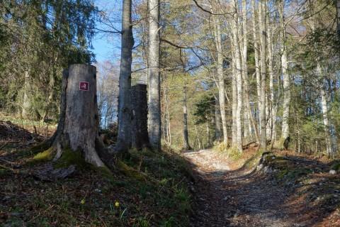 Aufstieg auf alten Jurawegen