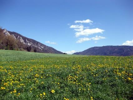 Blumenwiesen von Moutier nach Belprahon