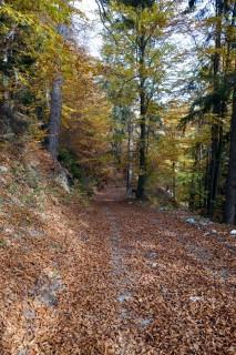Waldabfahrt Sinlio