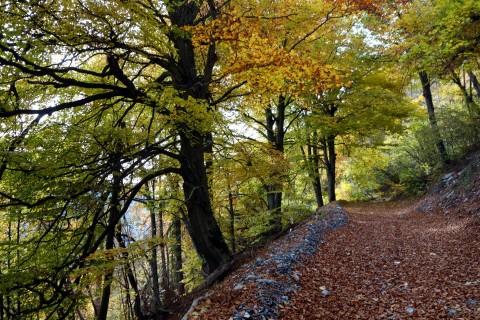 Waldabfahrt Sinday