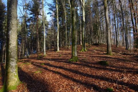 Zum Cache geht es Crosscountry durch den Wald