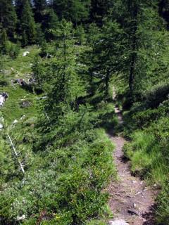 Buschwerk in Richtung Illgraben