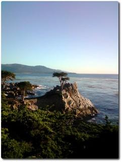 Lone Cypress bei schönem Wetter