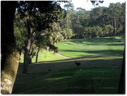 Wild auf dem Golfplatz