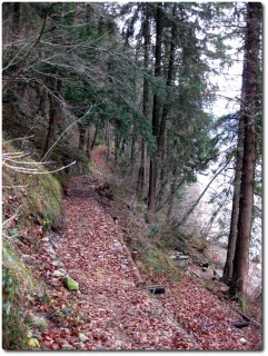 Trail am Südufer des Alpnachersees