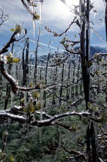 Eisblumen - Äpfel