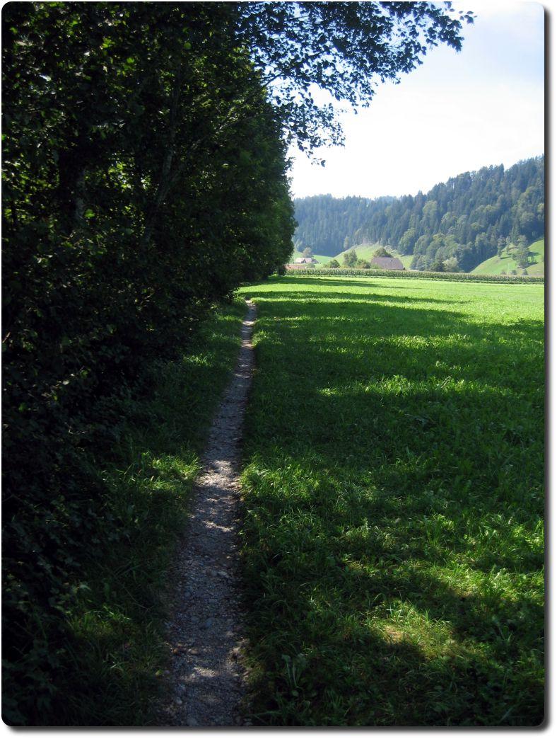 singletrail burgdorf Rastatt