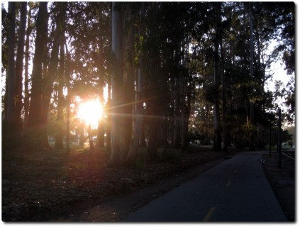 Sonnenuntergang im Eukalyptushain